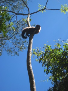 Monkey that almost landed on me!