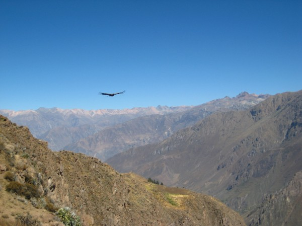 Spotting condors at Cruz del Condor