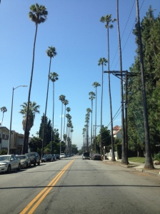 Palm trees lining the streets in Beverly Hills