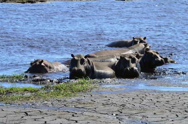 Hippo lovin'