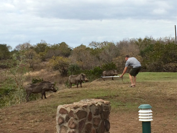 Dad with warthogs at Zulu Nyala